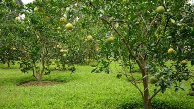 Lệ phí chuyển đổi từ đất trồng cây lâu năm sang đất thổ cư MỚI nhất