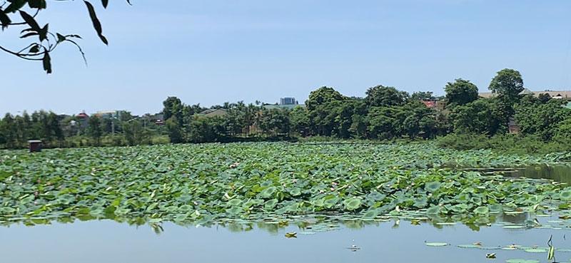 Hòa Lạc Lotus